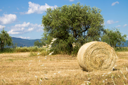 Wheat field with hay of bales in tuscan countryside photo