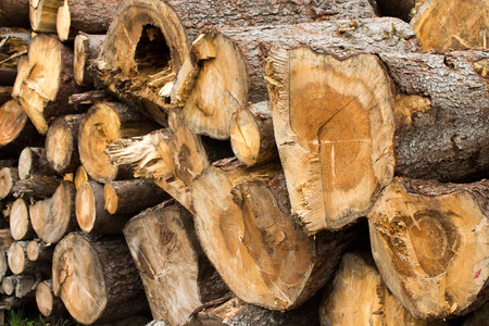 deforested: woodpile of freshly cut lumber