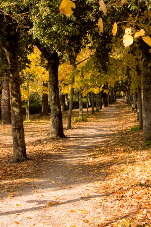wooded path: wooded path in a forest in an autumn day
