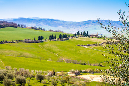 tuscan landscape, view of the green Val DOrcia with olive trees photo