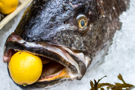 meagre: close up of a raw meagre fish with a lemon in the mouth