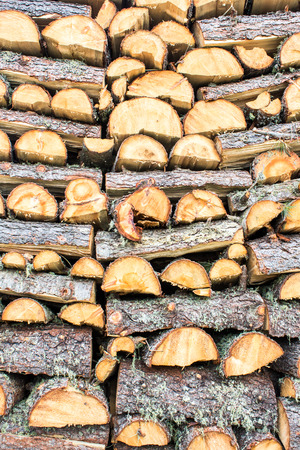 deforested: Background of a pile of trunks cutted