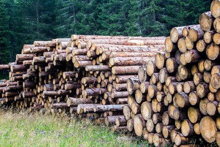 deforested: pile of tree trunks in the forest Stock Photo