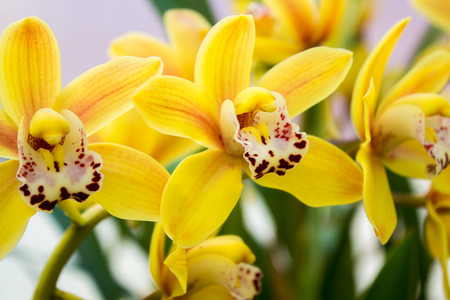 carpels: closeup of some orchids in a garden