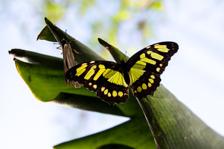 green and black butterfly resting on a leaf