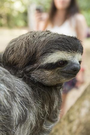 sloth: Sloth in Costa Rica Foto de archivo