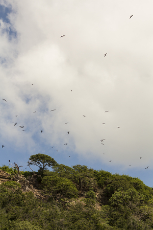 Island of reproduction of birds in Costa Rica