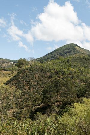 Costa Rica coffee plantation farm
