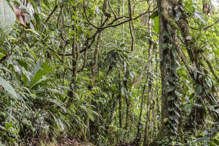 Rain forest canopy, Sarapiqui Costa Rica