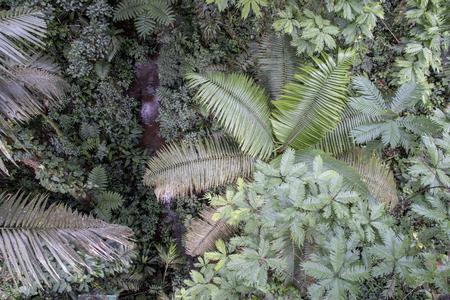 Rain forest canopy view, Sarapiqui, Costa Rica