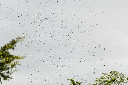 Raptor migration, Sarapiqui, Caribbean Costa Rica