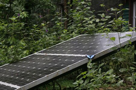 Blue morpho butterfly from Costa Rica perched on a solar panel in a forest environment. Clean energy production.