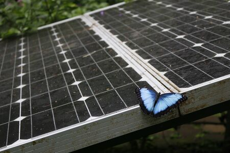 BBlue morpho butterfly from Costa Rica perched on a solar panel in a forest environment. Clean energy production. Stock fotó