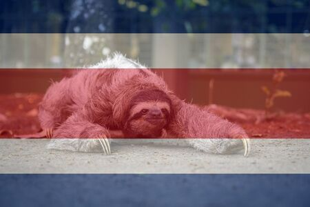 Three-toed sloth bear walking, with Costa Rica flag superimposed. Beautiful animal representative of the diversity of Costa Rica 写真素材
