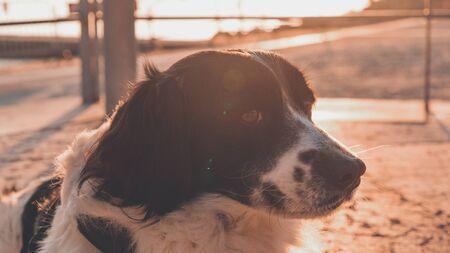 Dog portrait on the beach of Poetto, Cagliari, Italy Фото со стока