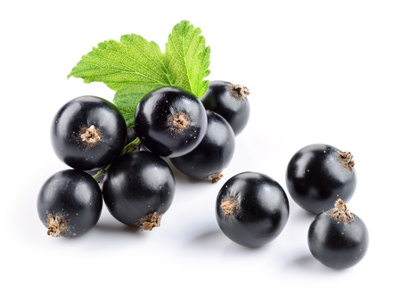 Black currant isolated. Currant with leaf on white. Standard-Bild