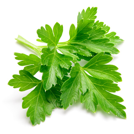 Parsley. Parsley isolated.