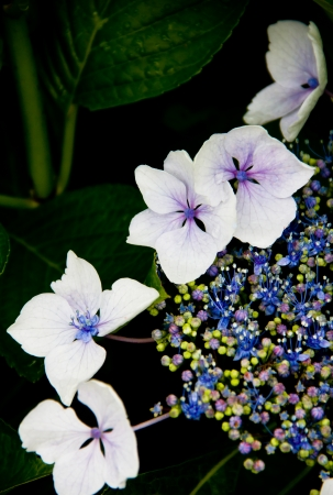 flowers and plants composition on black background Stock Photo - 15575315