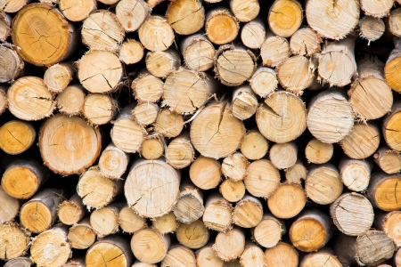 serrated: stack of freshly cut tree trunks