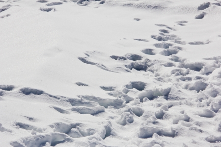 multiple footprints in the snow photo
