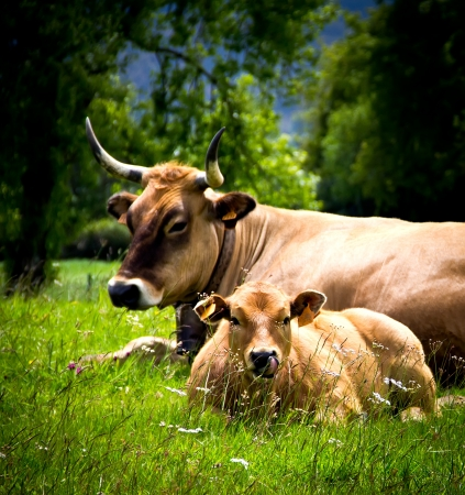 vaca y su ternero en una pradera