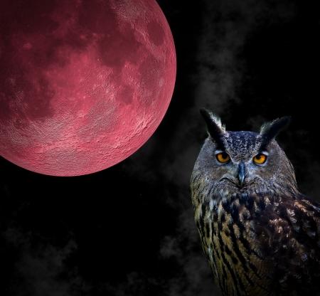 背景が赤い月のフクロウの肖像画