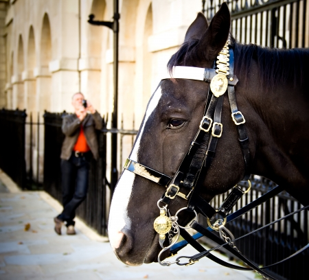 Man taking a photo of a horse of the royal guard. Lodon. Uk. photo
