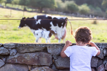 Portrait of a little girl in the countryside looking at cow and a calf photo