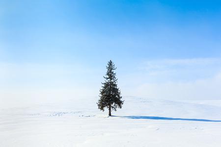 tree  forest: Christmas Tree Hokkaido Biei Stock Photo