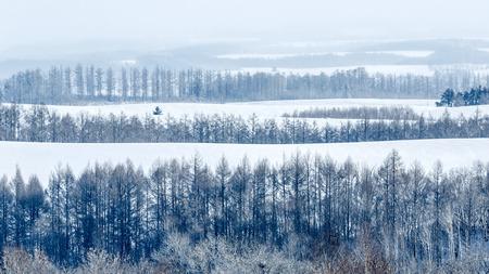 hokkaido: Hokkaido Biei Forest