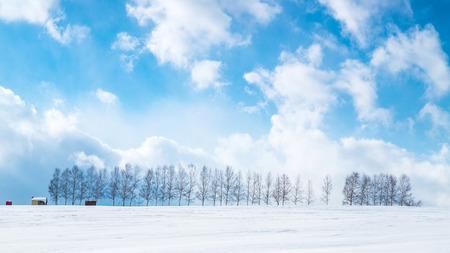 hokkaido: Hokkaido Biei tree Stock Photo