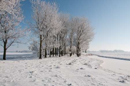 trees in snow and blue sky