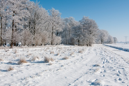trees in dutch snow under clear blue sky Stock Photo - 12337251
