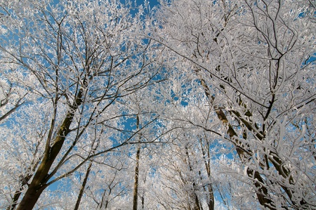 tree coverd with snow in blue sky