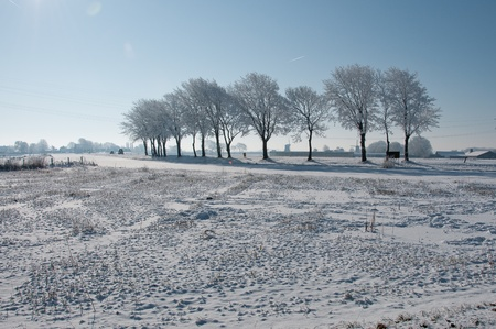 trees in dutch snow under clear blue sky Stock Photo - 12336469
