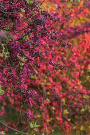 ve: Spring color impressionism (ve)