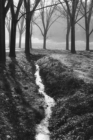 runnel: Runnel between trees in the park