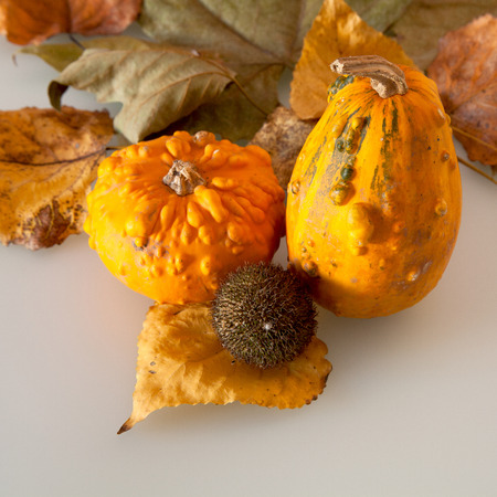 harvest background: Pumpkins and leaves