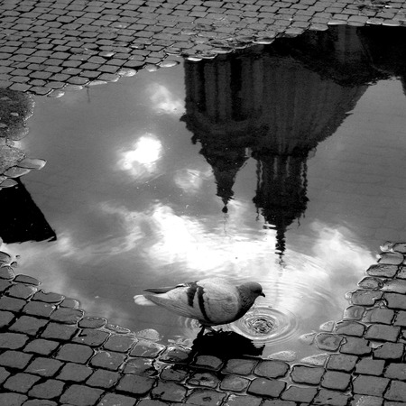 urbanscape: Piazza Navona Puddles