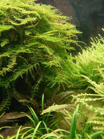 flora: aquarium flora background illuminated Stock Photo