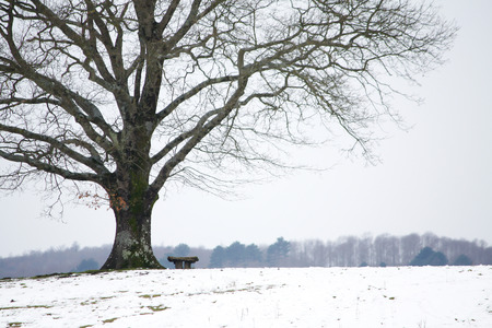 tree detail: Solitary tree detail and bench in winter horizontal Stock Photo
