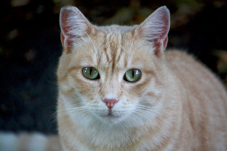 potrait: stray cat potrait outdoor