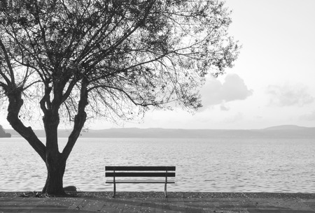 empty bench: Empty bench and tree with lake sight. Stock Photo
