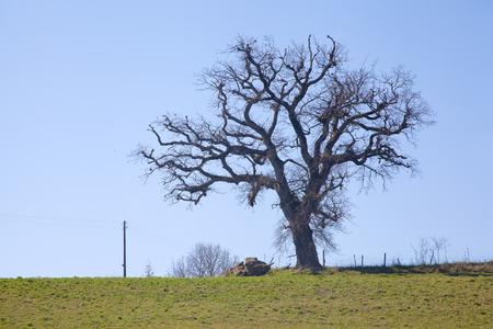 frightful: Creepy Solitary tree against the sky.