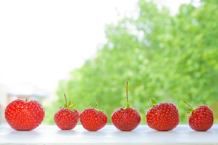 Strawberries in a row with panorama dof.