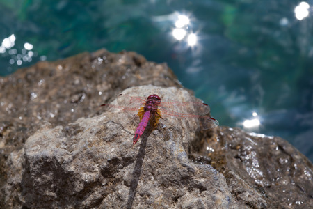 motionless: Red Dragonfly close up Stock Photo
