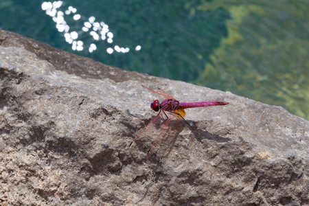 Red Dragonfly close up Stock Photo