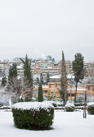 BUSH COVERED BY SNOW IN A PUBLIC PARK WITH LANDMARK VIEW