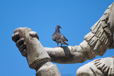 PIGEON RESTING ON THE ARM OF GIOVANNI DELLE BANDE NERE  MONUMENT