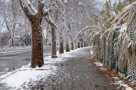 Tree Lined Avenue after a snowfall in Rome Фото со стока